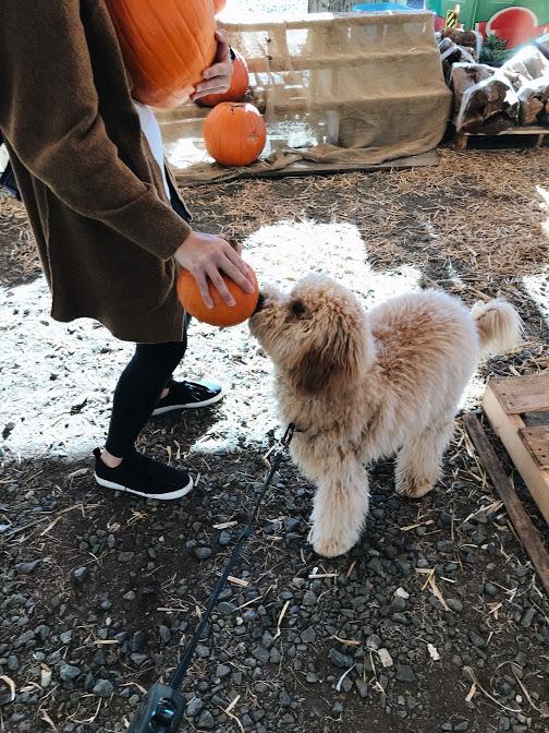 owen's first pumpkin picking // cait's plate