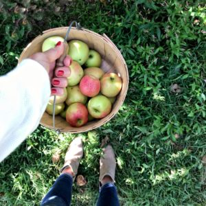 life: annual apple picking trip